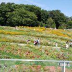 里山 花畑
