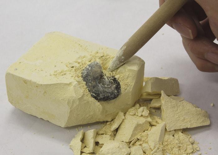 化石発掘 触れる図鑑