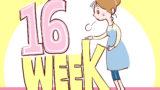 妊娠安定期はいつ?安定期にやることと3つの注意事項&赤ちゃんの様子を紹介